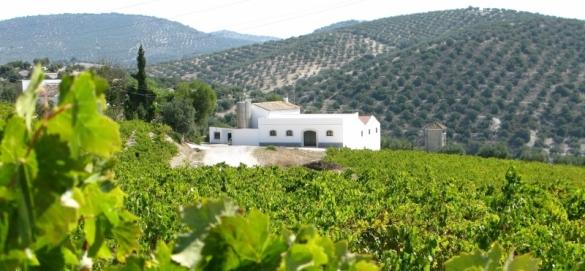 montilla vineyard tour