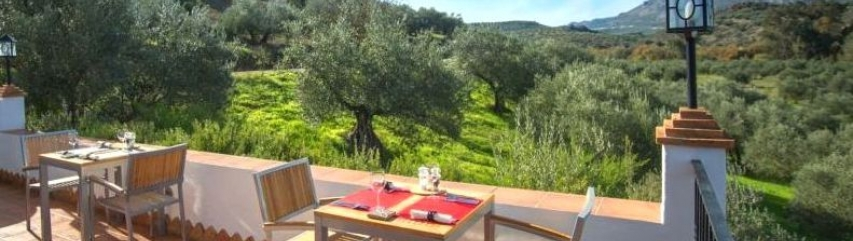 dinner with view olive groves andalucia casa olea spain