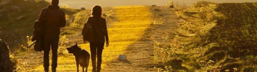 Emerald City Yellow Brick Road NBC tv series