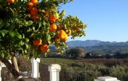 Casa Olea agriturismo Spain white villages Andalucia