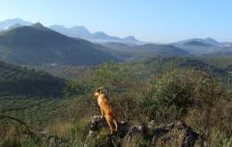 Casa Olea Spain rural retreat for hiking Andalucia