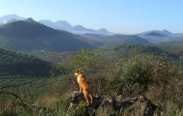 Casa Olea Spanien ländlichen Rückzugsort zum Wandern Andalusien