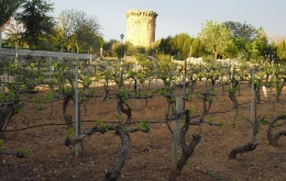 Casa Olea B&B rural Spain vineyard tour Alcala La Real