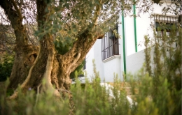 Casa Olea small hotels Spain gardens with olive trees
