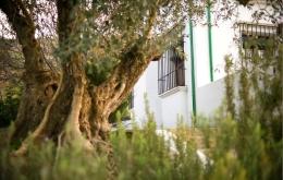 Casa Olea kleine Hotels Spanien Gärten mit Olivenbäumen