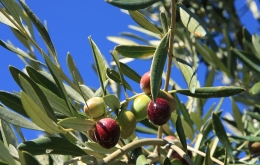 Casa Olea guesthouse Spain olive farm Andalucia