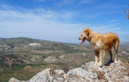 Casa Olea ländlichen Hotels Andalusien Selbstführer zu Fuß mit unserem Hund
