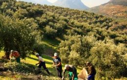 Casa Olea B&B ländliche Spanien Olivenernte Tour