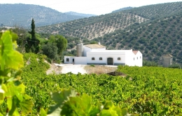 Casa Olea B&B rural Spain winery tour Montilla bodega
