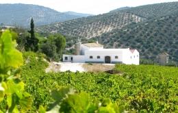 Casa Olea B&B rural Spain winery tour Montilla bodega