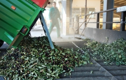 The local olive mills become a hive of activity during the harvest months of Dec to Feb.