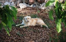 Nuestro precioso perro, Ruby - ¡su guía para el senderismo en las sierras!