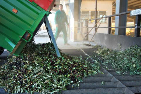 The Olive harvest in Spain | Casa Olea